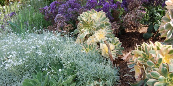 drought-tolerant-plants_1-a