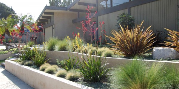 drought-tolerant-plants_8-a